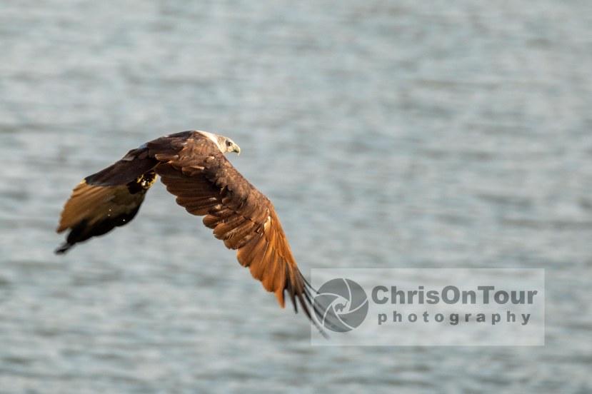 WP Karnataka Birds-1