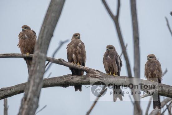 WP Karnataka Birds-10