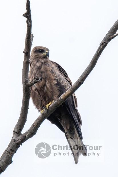 WP Karnataka Birds-11