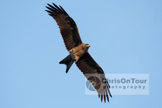 WP Karnataka Birds-2