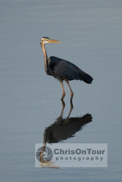 WP Karnataka Birds-4
