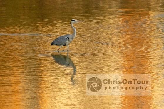 WP Karnataka Birds-5