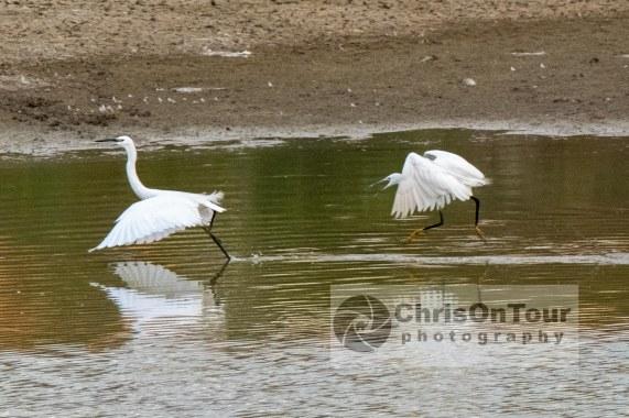 WP Karnataka Birds-6