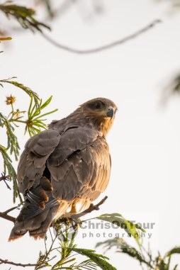 WP Karnataka Birds-7