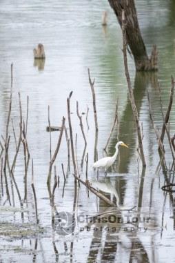 WP Karnataka Birds-9