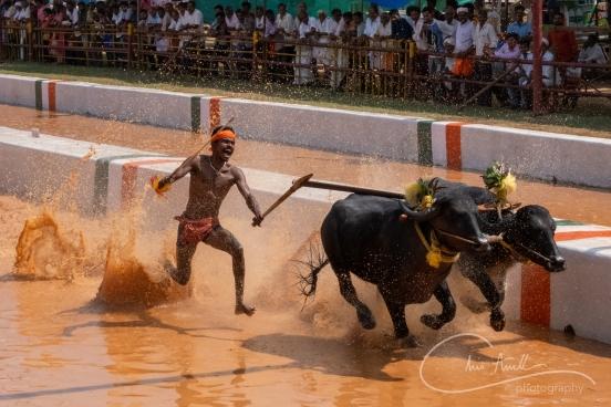 Puttur Kambala-19